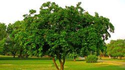 تفسير حلم غرس شجرة في البيت في المنام