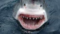 تفسير حلم أكل سمك القرش في المنام
