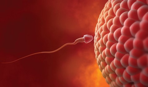 تفسير حلم الحمل من الحبيب في المنام