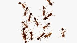 تفسير حلم النمل في البيت في المنام