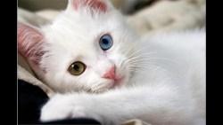 تفسير حلم امرأة تلد قطة برأسين في المنام