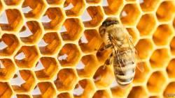 تفسير لدغة النحل في المنام