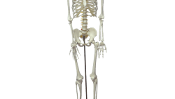 تفسير رؤية انكسار عظم الهيكل العظمي في المنام