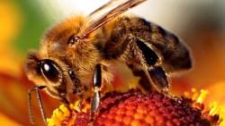 تفسير حلم النحل الميت في المنام
