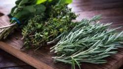 تفسير حلم الأعشاب الطبية في المنام
