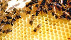 تفسير حلم ملكة النحل في المنام