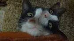 تفسير حلم قطة برأسين في المنام