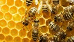 تفسير حلم أني أقتل النحل في المنام