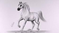 تفسير مطاردة الحصان في المنام