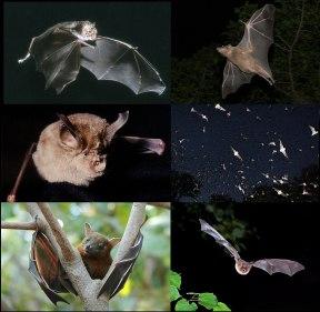 تفسير عضة الخفاش في الحلم