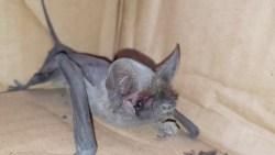 تفسير حلم الخفاش يعضني في المنام