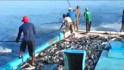 تفسير رؤية صيد السمك في المنام للمتزوجة