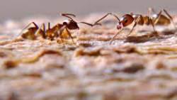 تفسير حلم النمل الميت في المنام
