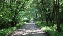تفسير حلم الركض في الغابة في المنام