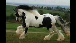 تفسير حلم حصان أبيض يلاحقني في المنام