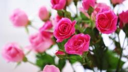 تفسير رؤية الورد في المنام