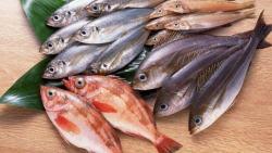 حلم رؤية السمك للمتوفي في المنام