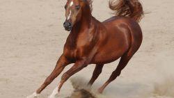 تفسير حلم الحصان البني يلاحقني في المنام