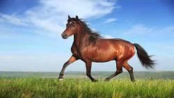 تفسير حلم الحصان البني الهائج في المنام