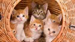 تفسير رؤية القطط في المنام للعزباء