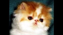 تفسير حلم سماع صوت القطط للعزباء في المنام