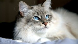 اسماء قطط ذكور عربية ومعانيها