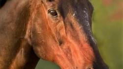 تفسير حلم حصان ابيض يطير في السماء في المنام