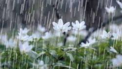 ادعية عند نزول المطر