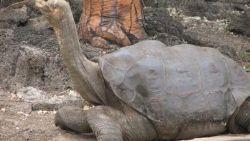 حيوانات منقرضة وسبب انقراضها