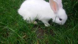 تفسير حلم الأرانب لابن سيرين