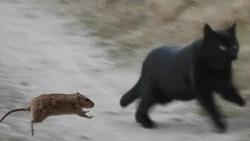 قتل الفئران في المنام