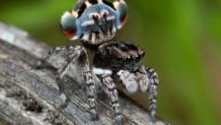 تفسير حلم العنكبوت الأسود والأبيض في المنام