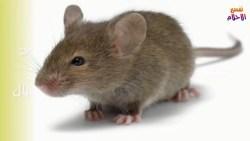 تفسير حلم مصيدة الفئران للرجل