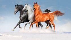 تفسير حلم الركوب على حصان لامرأة متزوجة
