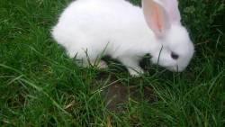 تفسير حلم الأرانب للمرأة الحامل