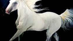 تفسير حلم الركوب على حصان ابيض بالمنام