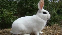 تفسير حلم رؤية العديد من الأرانب في المنام للعزباء