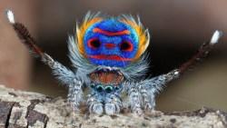 تفسير رؤية العنكبوت في منام العزباء