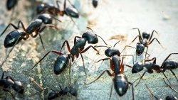 تفسير حلم النمل في المنام للعصيمي