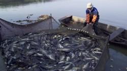 تفسير حلم صيد الأسماك للحامل