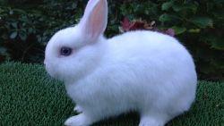 تفسير حلم اصطياد الأرانب في المنام