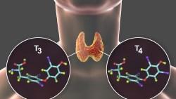 كم يستغرق علاج خمول الغدة الدرقية