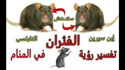 """تفسير رؤية الجرذ """"الفأر"""" لابن سيرين"""