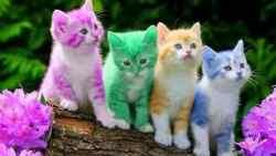 اسماء قطط اناث بالانجليزي