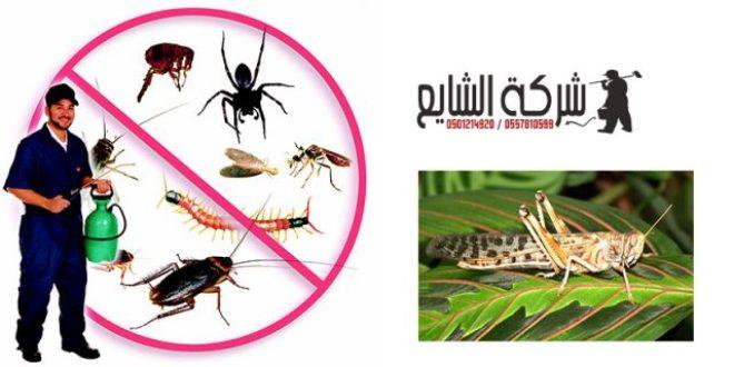مكافحة الجراد بالمبيدات 0501214920 بالرياض افضل شركات ابادة الحشرات المنزلية