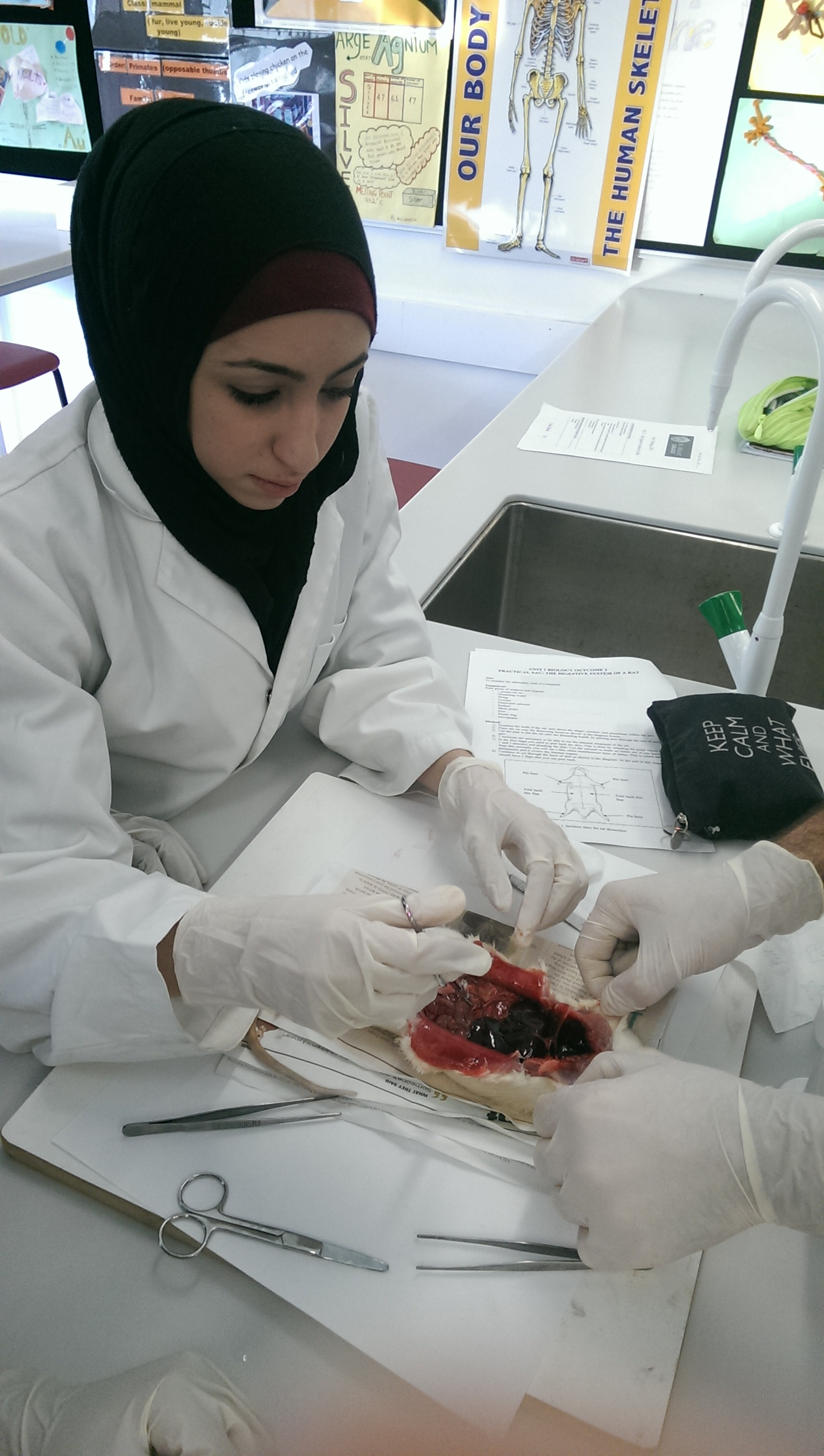 Rat Dissection Sac
