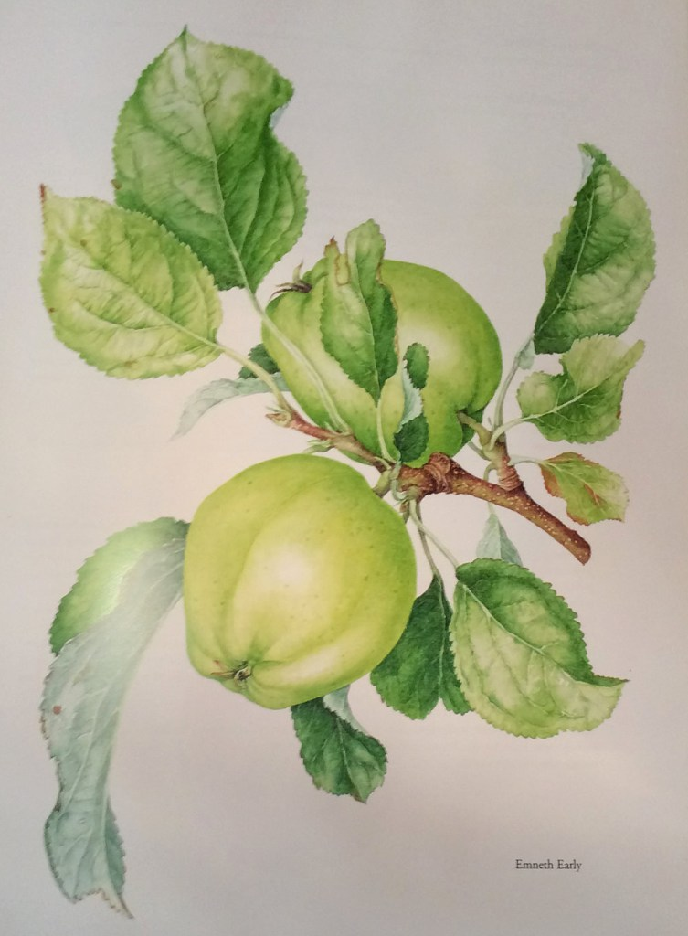 Emneth Early Apple