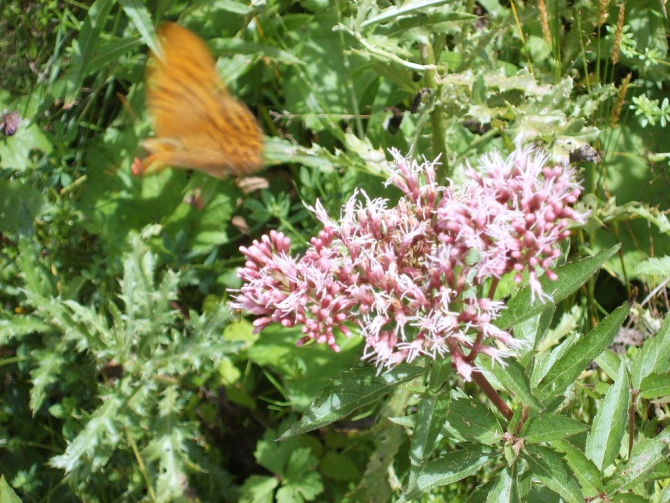 Startender Schmetterling