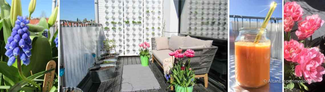 Min urbane have på altanen