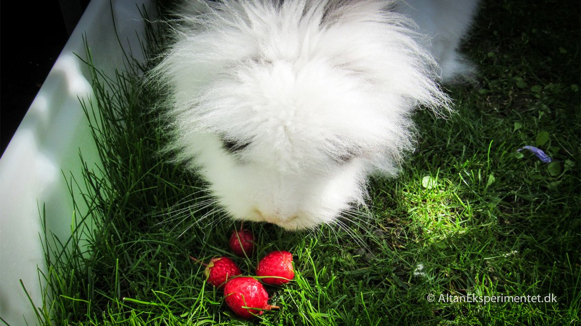 Kanin-paradis på altanen